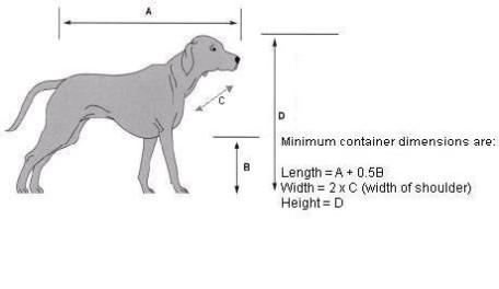 dog-460x266