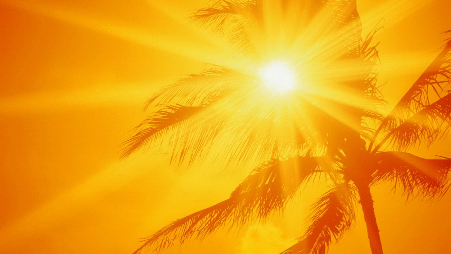 Cool Tips to Beat the Summer Heat