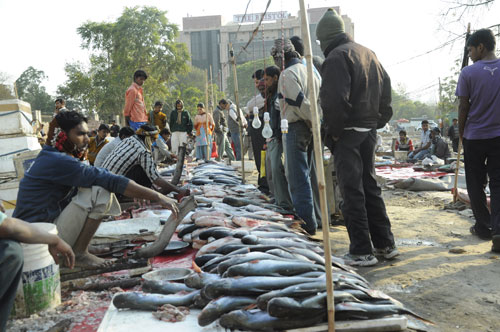 Best Places to Buy Raw Fish in Gurgaon - Gurgaonmoms