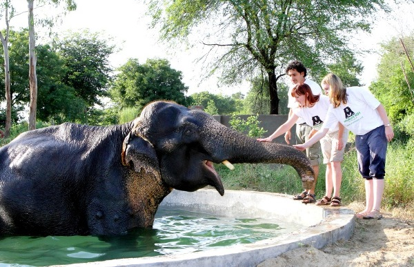 Calling Animal Lovers for a Wild Weekend with Wildlife SOS