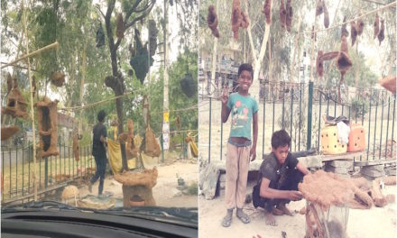Bird Houses for Sale in Gurgaon by Young Boys with Big Dreams