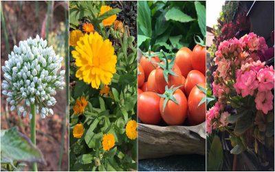 Colours of a Winter Garden