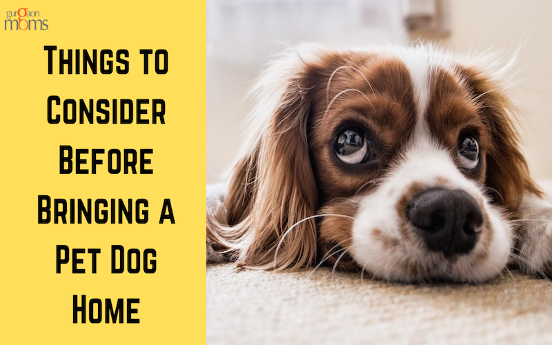 Things to Consider Before Bringing a Pet Dog Home