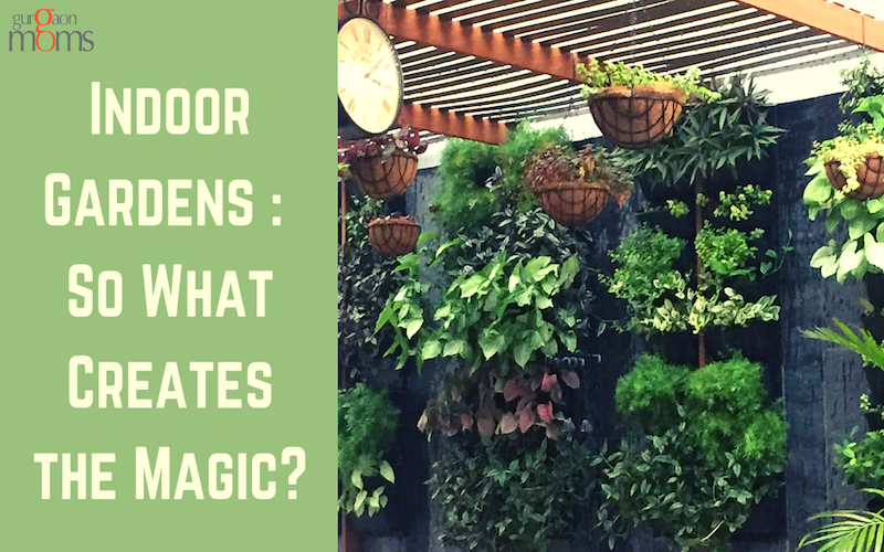 Indoor Gardens : So What Creates the Magic?
